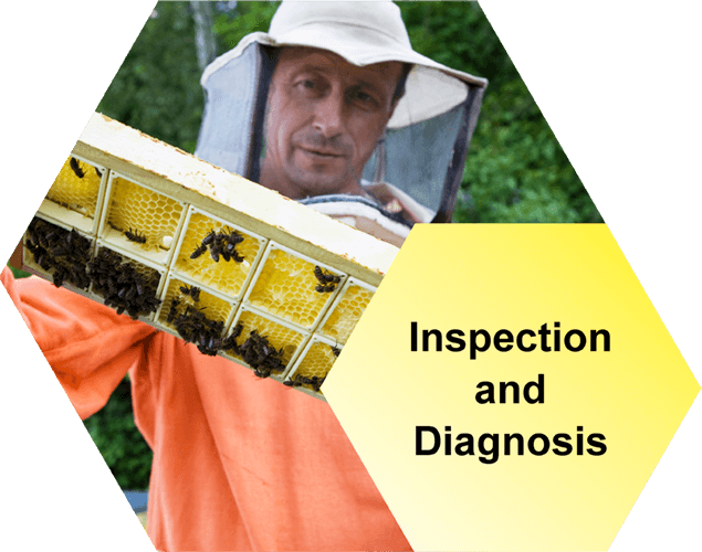 AFB Inspection and Diagnosis