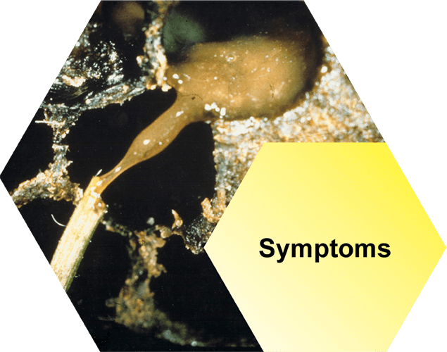 AFB Symptoms