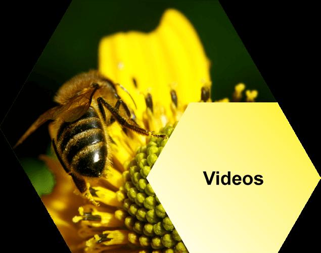 AFB Videos