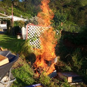 Burning of AFB infected hive in backyard, photo courtesy of Chris Crook